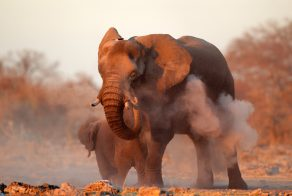 Go on an African Safari and view the Big Five