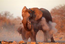 Elephants on a Big 5 African Safari
